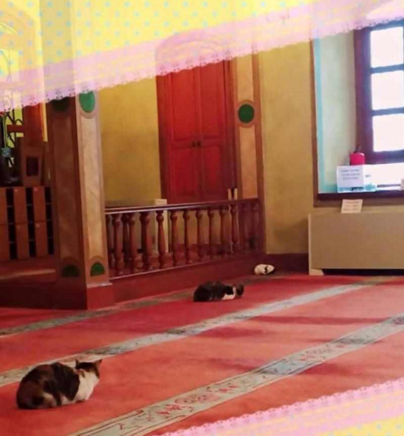 imam-and-cats-2