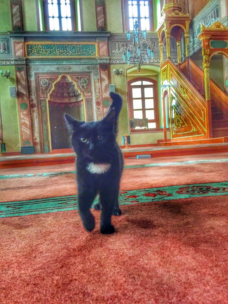 imam-and-cats-3